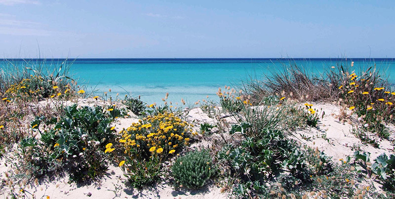 Best Virgin Beaches in Mallorca's South